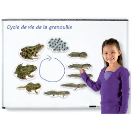 A - Grenouille