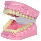 Dentier articulé